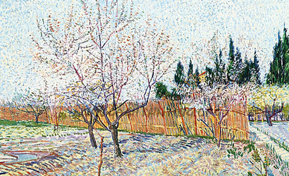 Orchard with Peach Trees in Blossom by Vincent Van Gogh